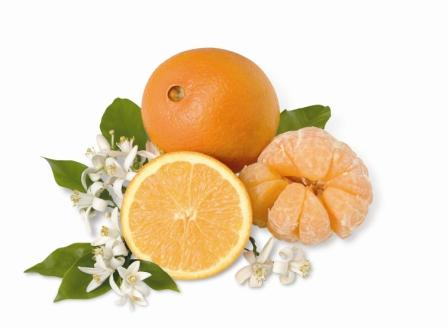 Honeybell Tangelos and Navel Oranges