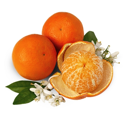 Temple Oranges and Star Grapefruit