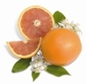 Navel Oranges and Red Navel Oranges