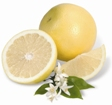 Navel Oranges and White Grapefruit